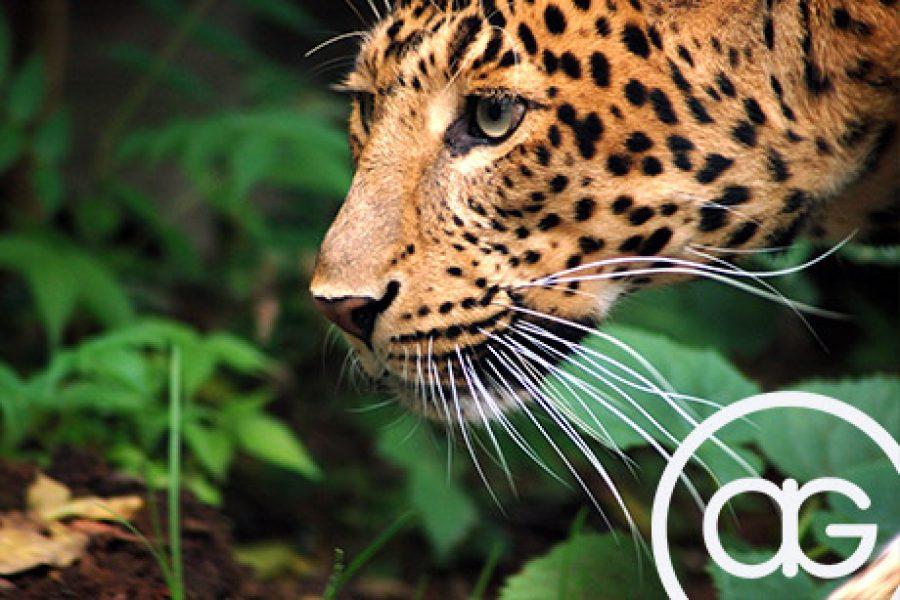 Ginini antipode parraine le parc zoologique de paris